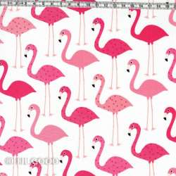 Grands flamants roses